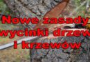 Nowe przepisy w sprawie wycinki drzew