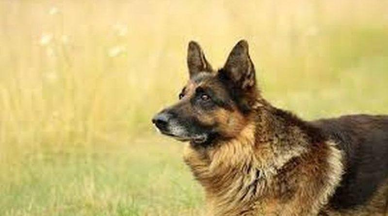 Obowiązki właściciela psa