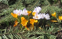 wiosna 2007 18 Pawła Dutki 056 (13)